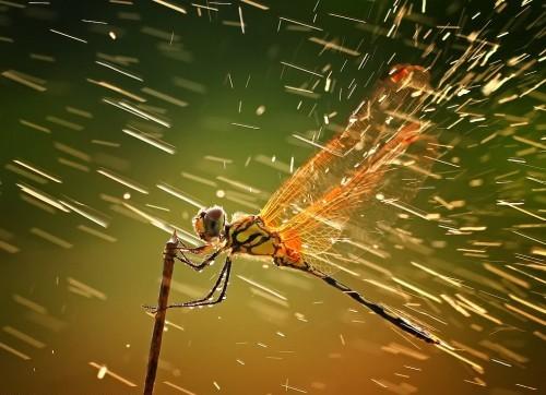 Dự báo thời tiết nhờ quan sát hoạt động của chuồn chuồn
